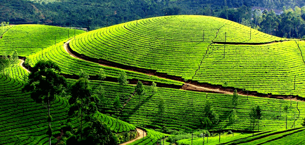 Ooty Coonoor Tour Car Package from Bangalore