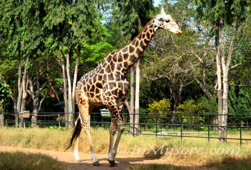 Mysore Zoo - Sri Chamarajendra Zoological Gardens