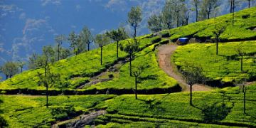 Mysore Ooty Tour Package from Mysore 4 Days