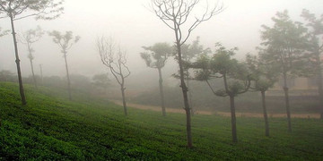 Ooty Tour Package from Bangalore for 3 Days
