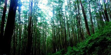 Ooty Tour Package from Mysore