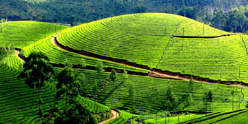 Mysore Ooty Tour Package from Mysore
